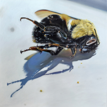 SL20_Hive