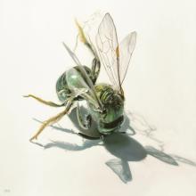 SL9_Hive