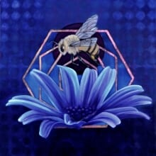 siner - bee vision