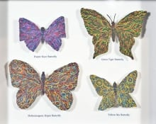 """Specimen Care Collection: \""""Butterfly\"""""""