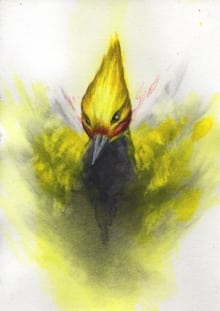 Blonde-Crested Woodpecker Study