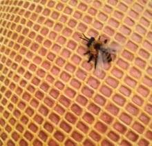 Fishnet #1: Honey