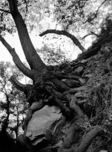 """Mohamed Alaali""""rock tree Harmony"""
