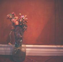 Hannah-Kozak-Amamos-tantos-a-las-flores-que-las-matamos-We-love-flowers-so-much-we-kill-them-Number 13_April-09,-2018