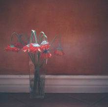 Hannah-Kozak-Amamos-tantos-a-las-flores-que-las-matamos-We-love-flowers-so-much-we-kill-them-Number 14_March-05,-2018