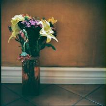 Hannah-Kozak-Amamos-tantos-a-las-flores-que-las-matamos---We-love-flowers-so-much-we-kill-them-Number 20_June-30,-2018