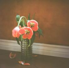 Hannah-Kozak-Amamos-tantos-a-las-flores-que-las-matamos---We-love-flowers-so-much-we-kill-them-Number 6_November-26,-2017