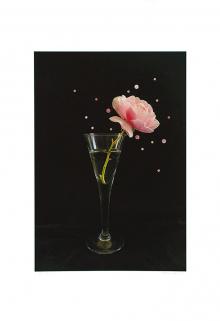 Nathalie Seaver-A Rose