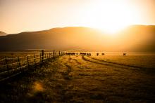1_Rush-Varela-Tejon-Ranch-Life