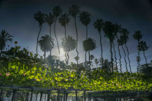 Andy_House_Echo_Park_Reflection_9