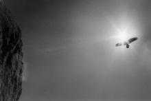 David-Uzzardi-Bird-into-Sun