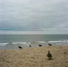 Hannah_Kozak_5-La-Jolla-Seagulls