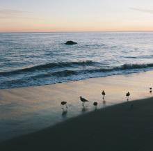 Hannah_Kozak_6-Malibu-Sandpipers-