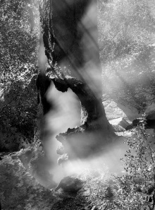 mohamed-alaali-When-trees-smoke
