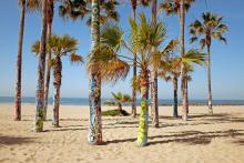 9.-Waleska-Santiago-Venice-Palms