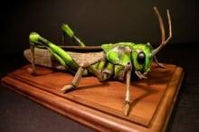Mark the Locust