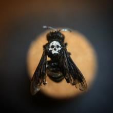 Emo-Bee-Web