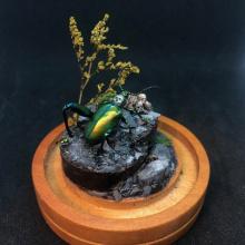 Frog-Beetle-web
