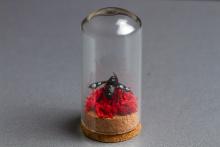 Metal-Bee-web