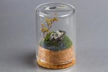 Mini-Beetle-web