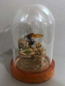 T-Wasp-web