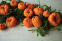 pumpkins-close-up-for-web