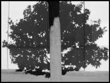 Ave Pildas-Shadow Tree