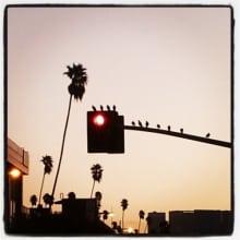 ronnie-t-clark-early-birdies
